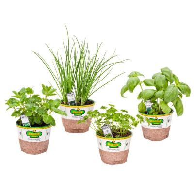 basil, chives, mint, curled parsley, Organic, The Home Depot, Edible Garden