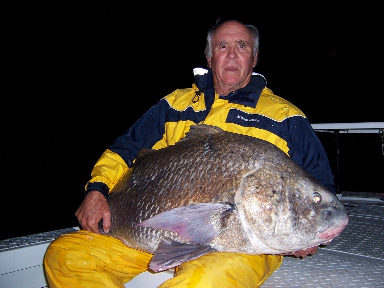 Big fishes of the world drum black pogonias cromis for Saltwater drum fish