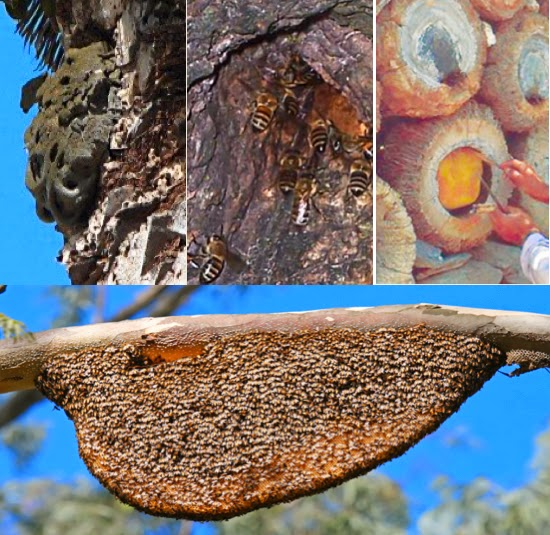 how to get a beehive out of a tree