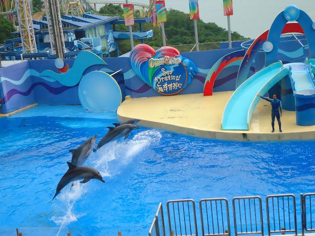 Dolphins at Ocean Park Hong kong