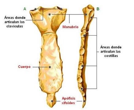 Conociendo Mi Sistema Oseo 206 Huesos