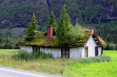foto 10 jardin en azotea en Noruega