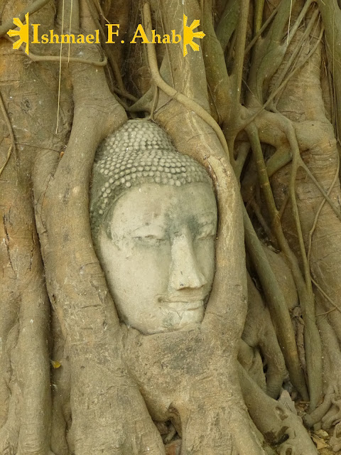 Head of buddha stuck in a tree in Wat Mahathat, Ayutthaya Historical Park