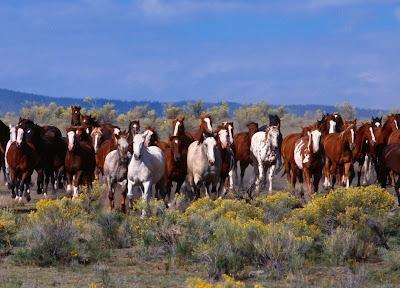 Orígenes del caballo Mustang