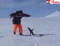 El ataque del pingüino