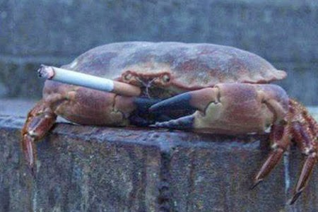 Crabs Smoking Cigarette