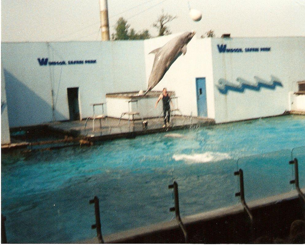 Windsor Safari Park memories, captive killers and whale ...