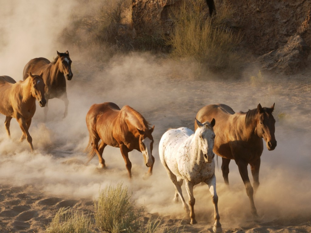 Great   Wallpaper Horse Rose - wild+horses+wallpapers+12  Trends_701330.jpg