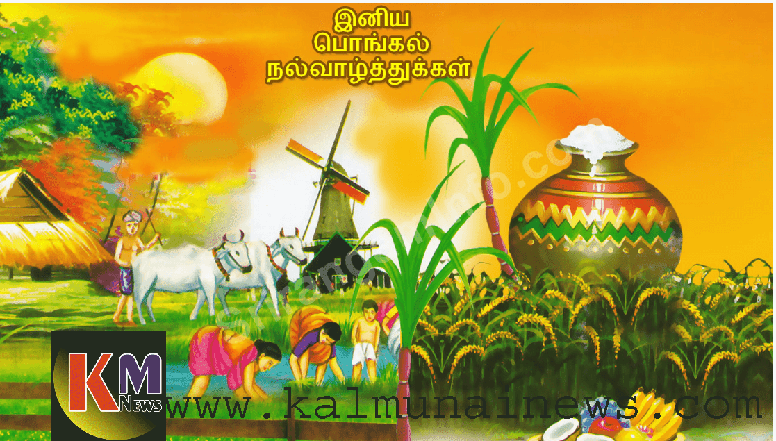 Happy Thaippongal