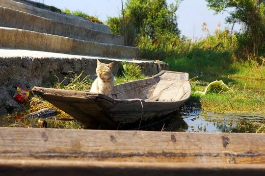 Inle Lake cats