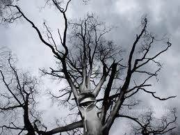 Ternyata Pohon pun Menjerit-jerit Saat Haus dari daniel maulana