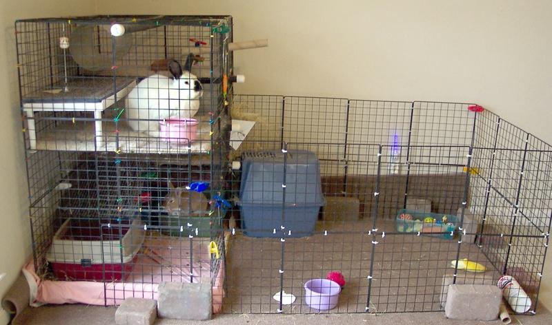 Как оборудовать клетку для кролика своими руками 27