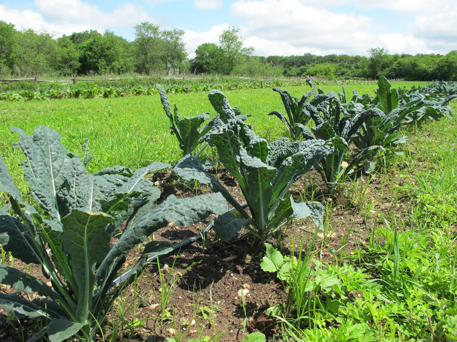 Culinary Types: Hail to the Kale