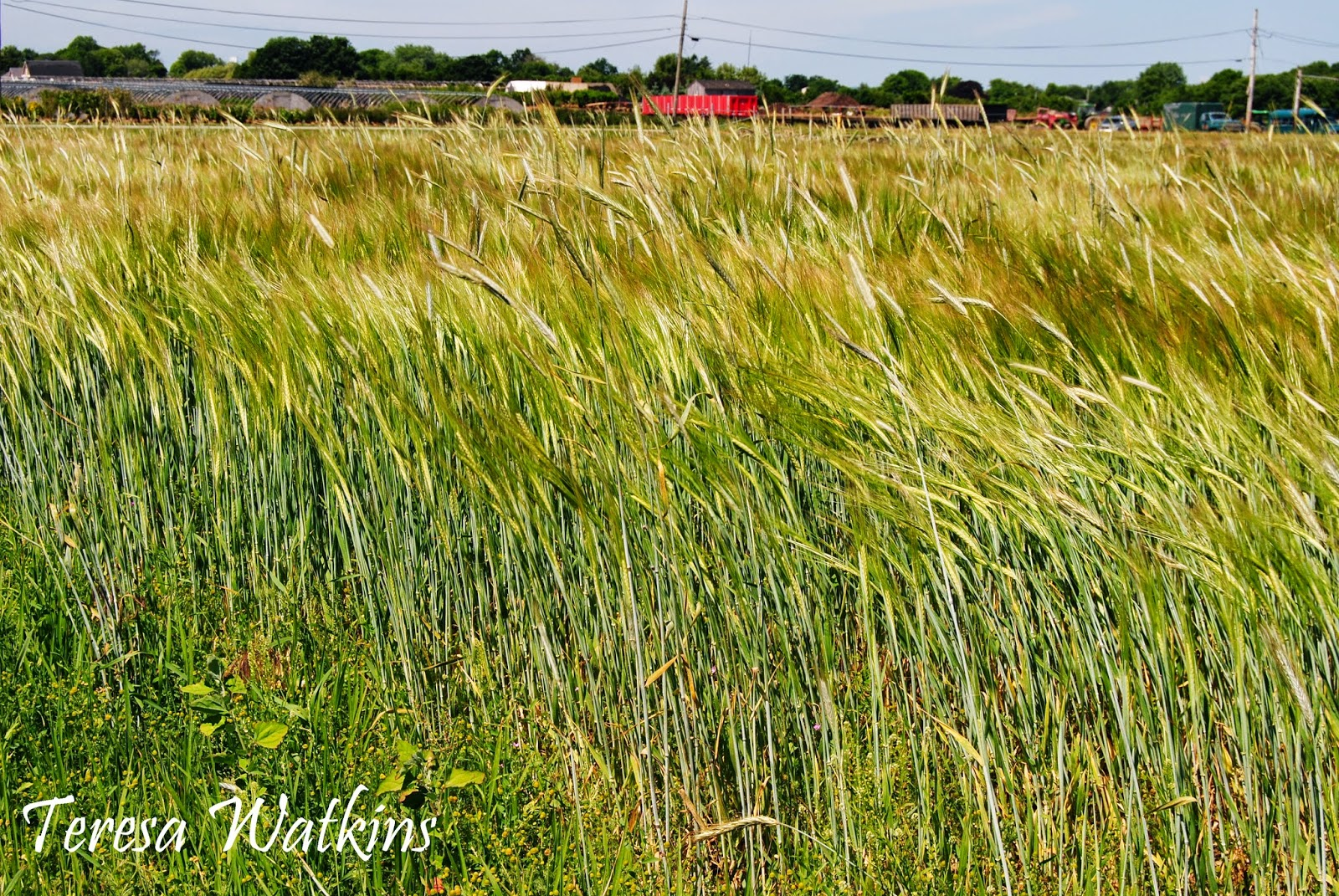 earth shattering gardening john barleycorn to the rescue