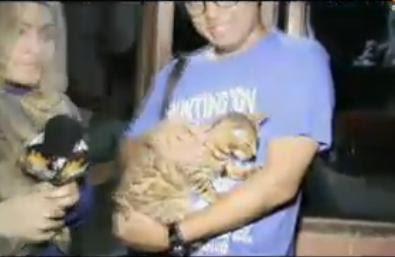 Uya Kuya membeli kucing Bengal Seharga 25 juta