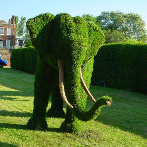 Arte y jardiner a arte topiario jardiner a ornamental for Jardines con arboles y arbustos