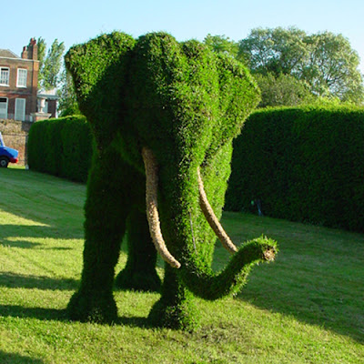 Arte y jardiner a arte topiario jardiner a ornamental for Arboles jardineria