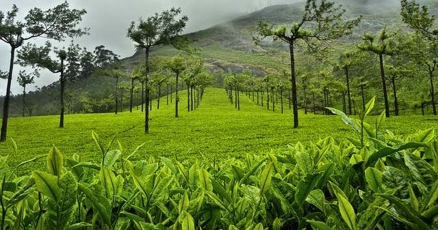 Image result for mUNNAR 640x336