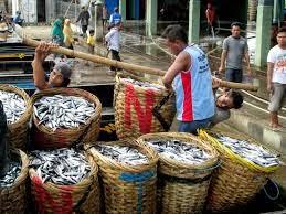 Fungsi dan Manfaat Tempat Pelelangan Ikan (TPI)