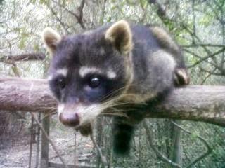 Fauna  del  Uruguay