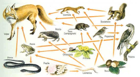 Blu blunotte gli esseri viventi e il loro ambiente for Gli animali dello stagno