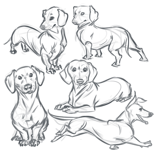 Line Drawing Dachshund : Imaginary element spring school stuff
