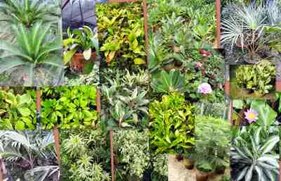 Marlene bermejo ornamental plants for Decorative bushes for landscaping