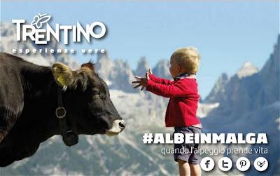 albe malga Trentino