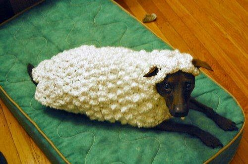 photo de cosplay de mouton pour un chien