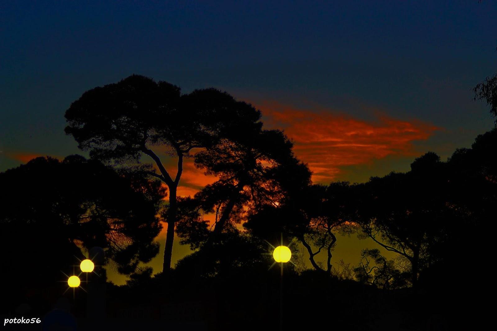 Playa del Chorrillo, Los Pinares, Rota, Cadiz, Vista nocturna, Fotografía de árboles