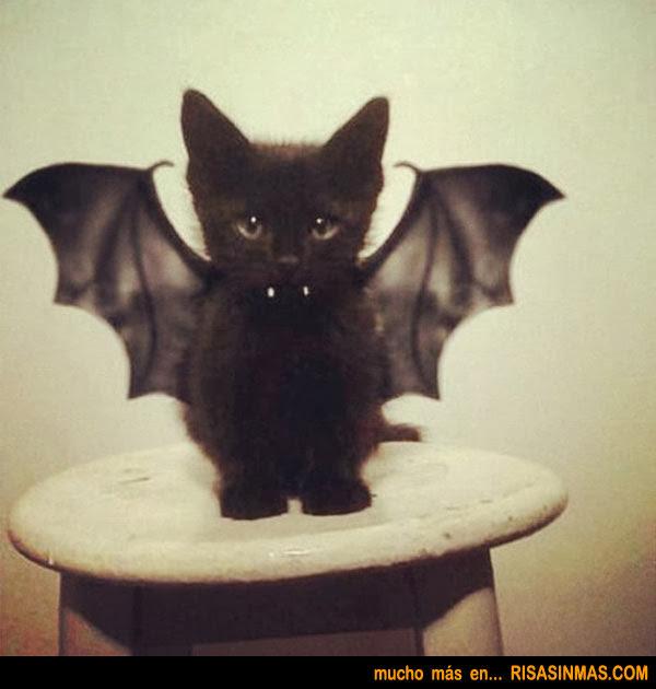 Animal world - Disfraces de gatos para ninos ...