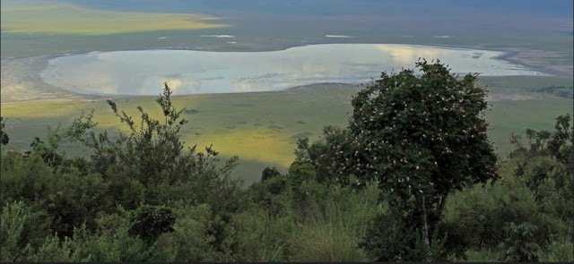 Buy office art of Ngorongoro Crater