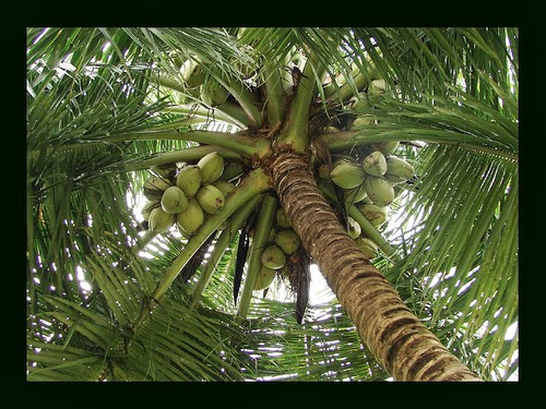 General English For All Benifits Of COCONUT