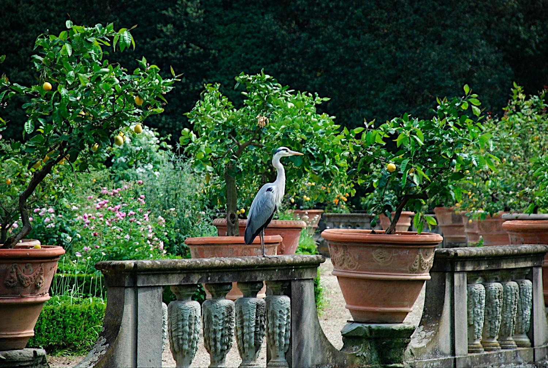 Den passionerade trädgårdsturisten: resa till italien toscana med ...