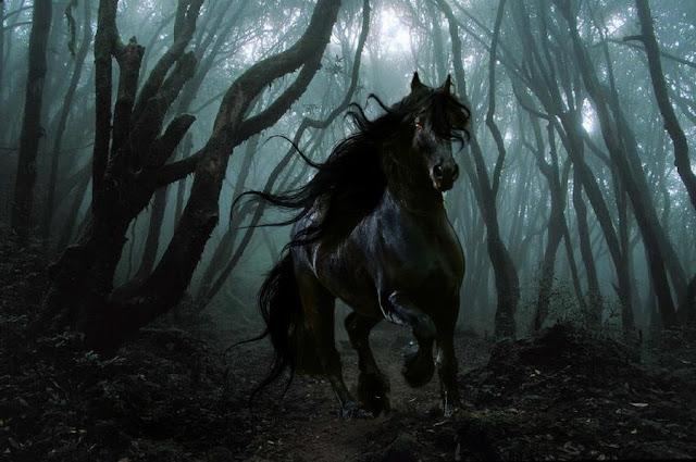 Zwarte kat of een zwart paard