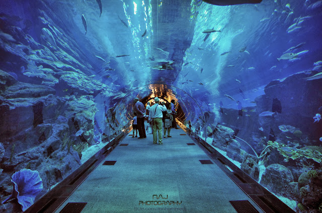 O incrível Dubai Aquarium & Underwater Zoo