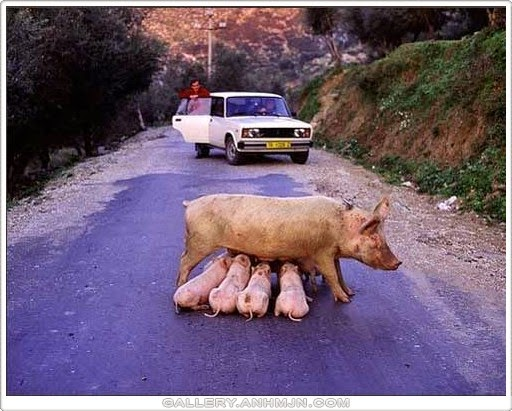 Berhati hati ketika memandu