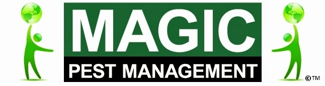 Magic Pest Management