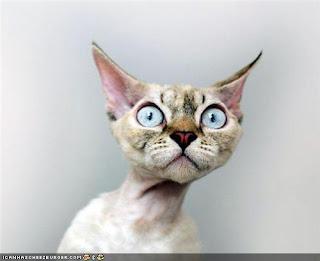 безусый кот