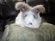 He's an English Angora and is still just a youngster at only four months.