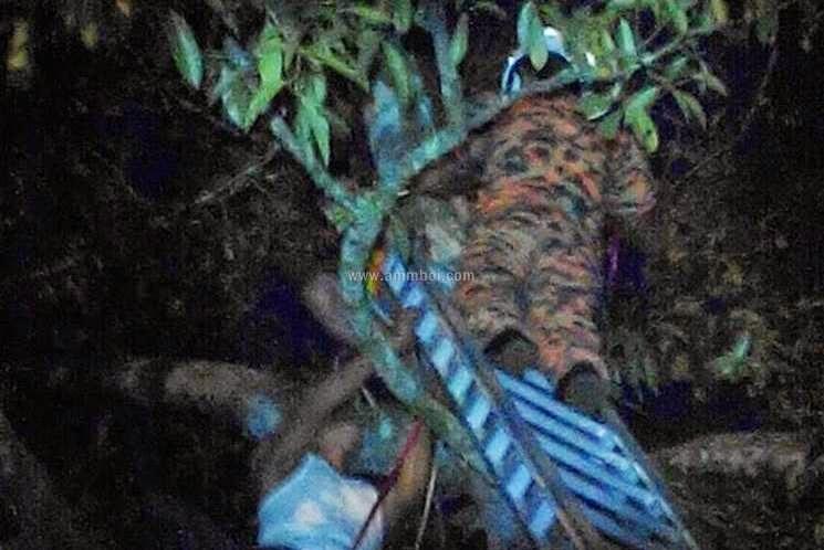 Bomba Selamatkan Lelaki Pengsan Atas Pokok, info, terkini,berita, bomba