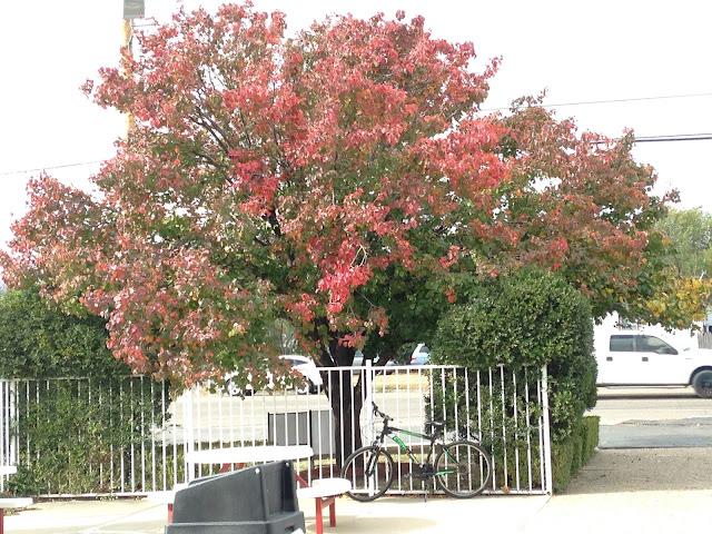autumn texas pictures