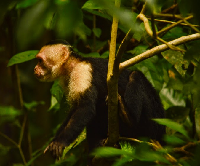 Travel Wish List: Chasing Monkeys in Costa Rica // The-Lifestyle-Project.com
