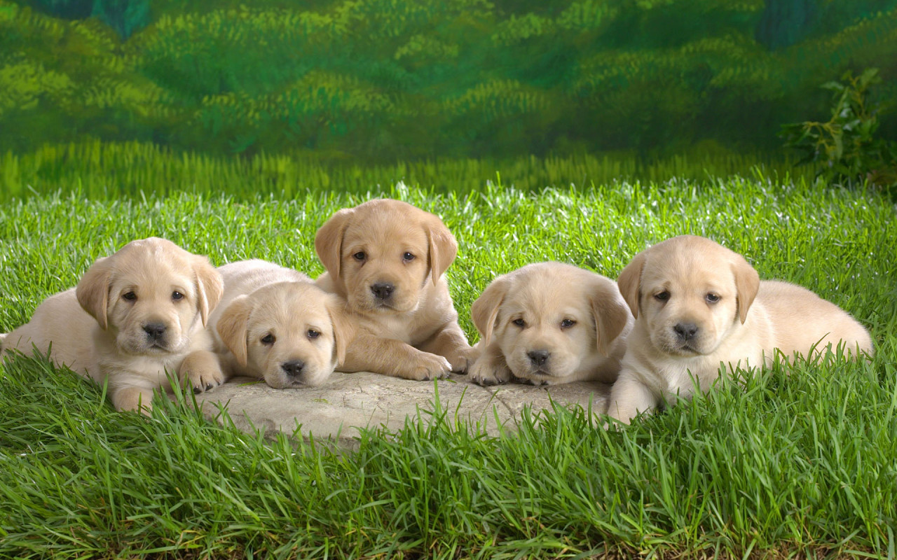 Cute Puppies Pictures & Wallpaper of Dog Breeds