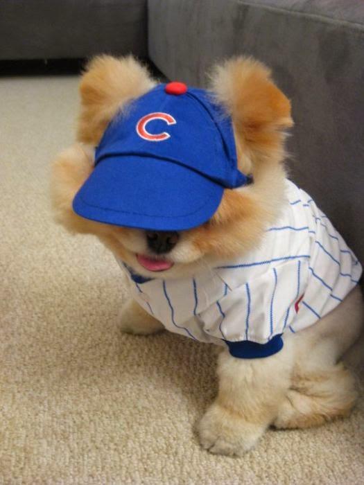perro disfrazado de beisbolista