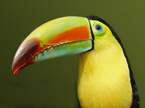 Toucan sam hd wallpapers free download wallpapers photosz for Toucan sam