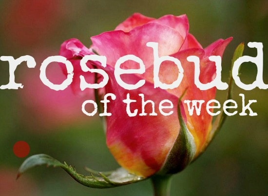 ROSEBUD OF THE WEEK: Ana B