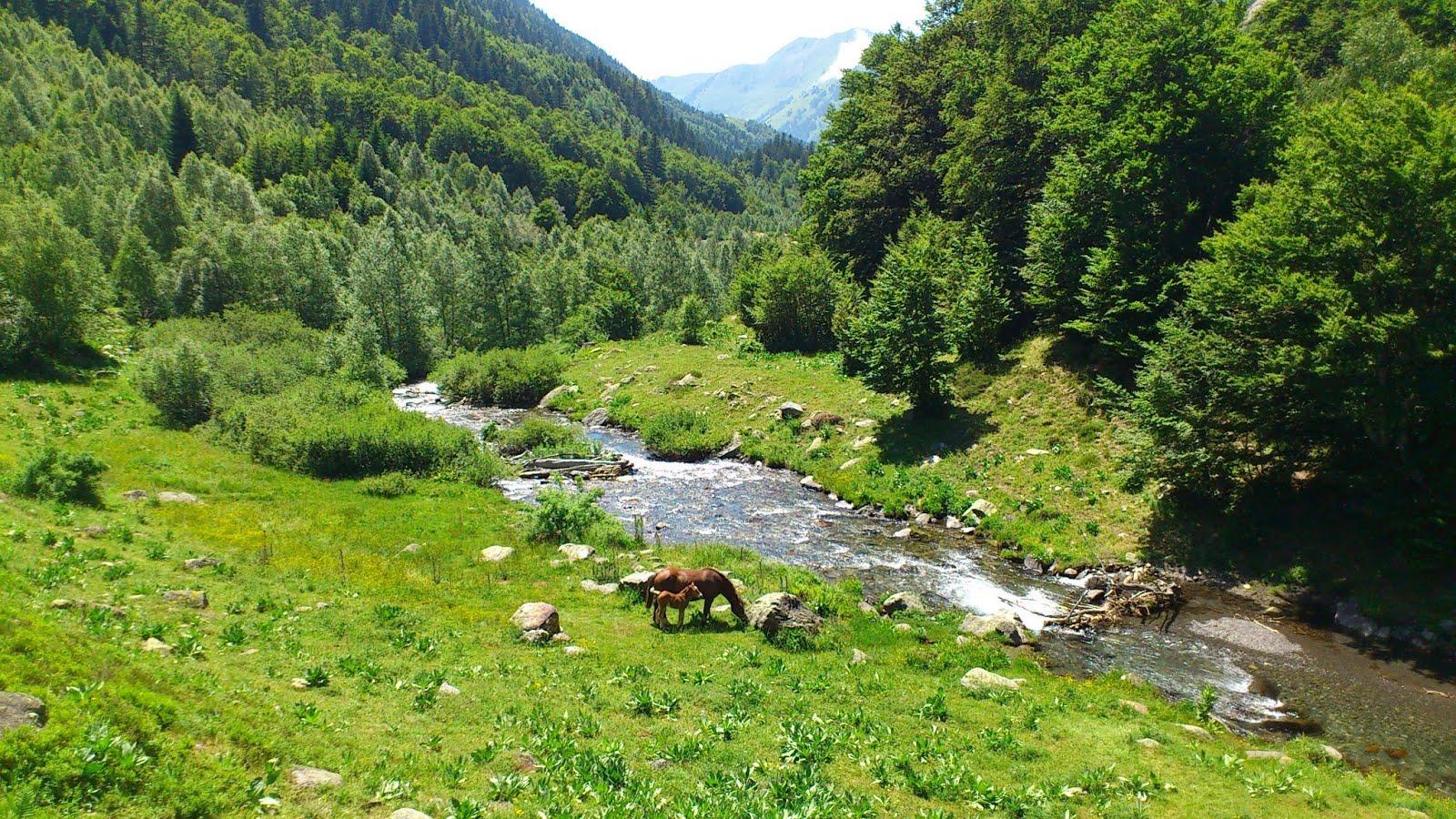 Río con caballos