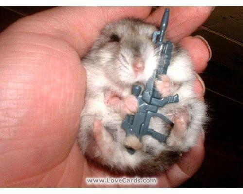 Funny Animals with Guns Pictures 2011