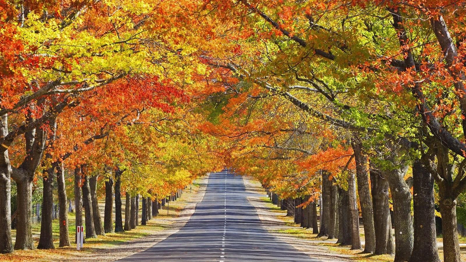 beautiful autumn season wallpapers all hd wallpapers